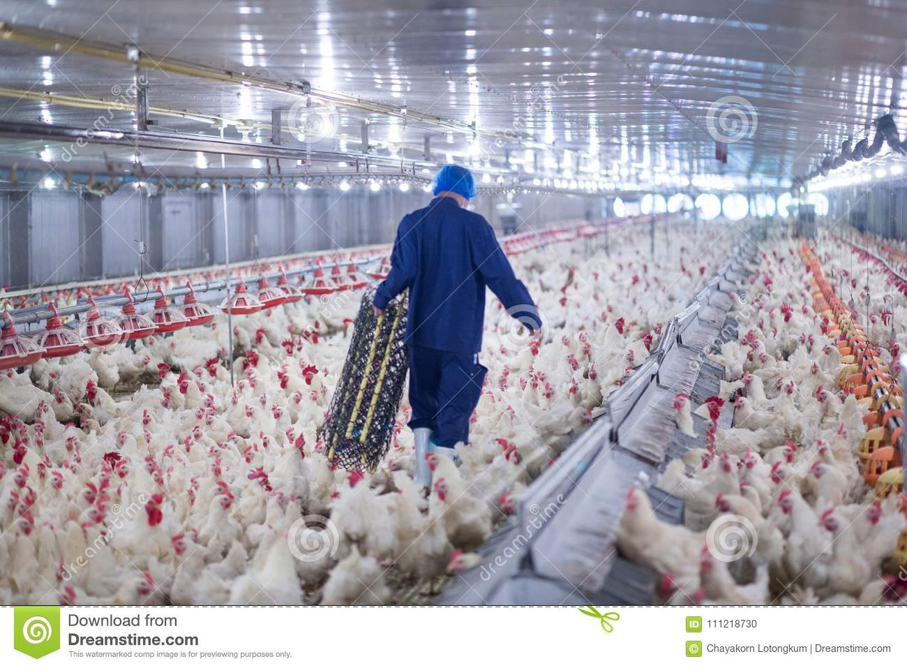 DIPLOMA IN POULTRY FARMING IIOSD